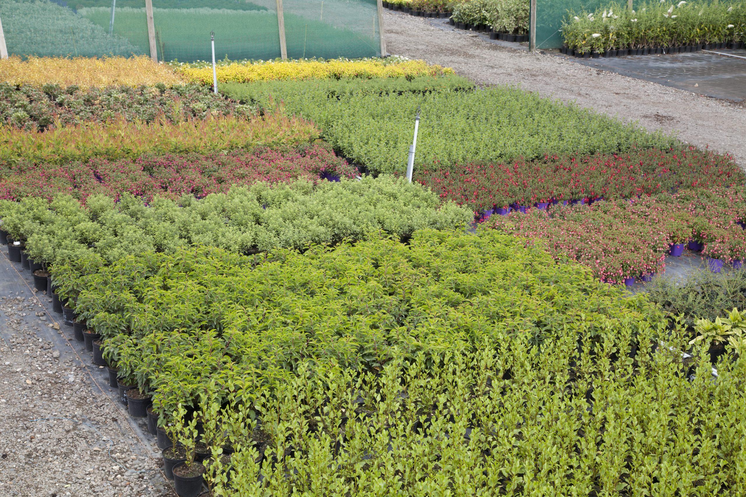 Mixed shrubs at Amethyst