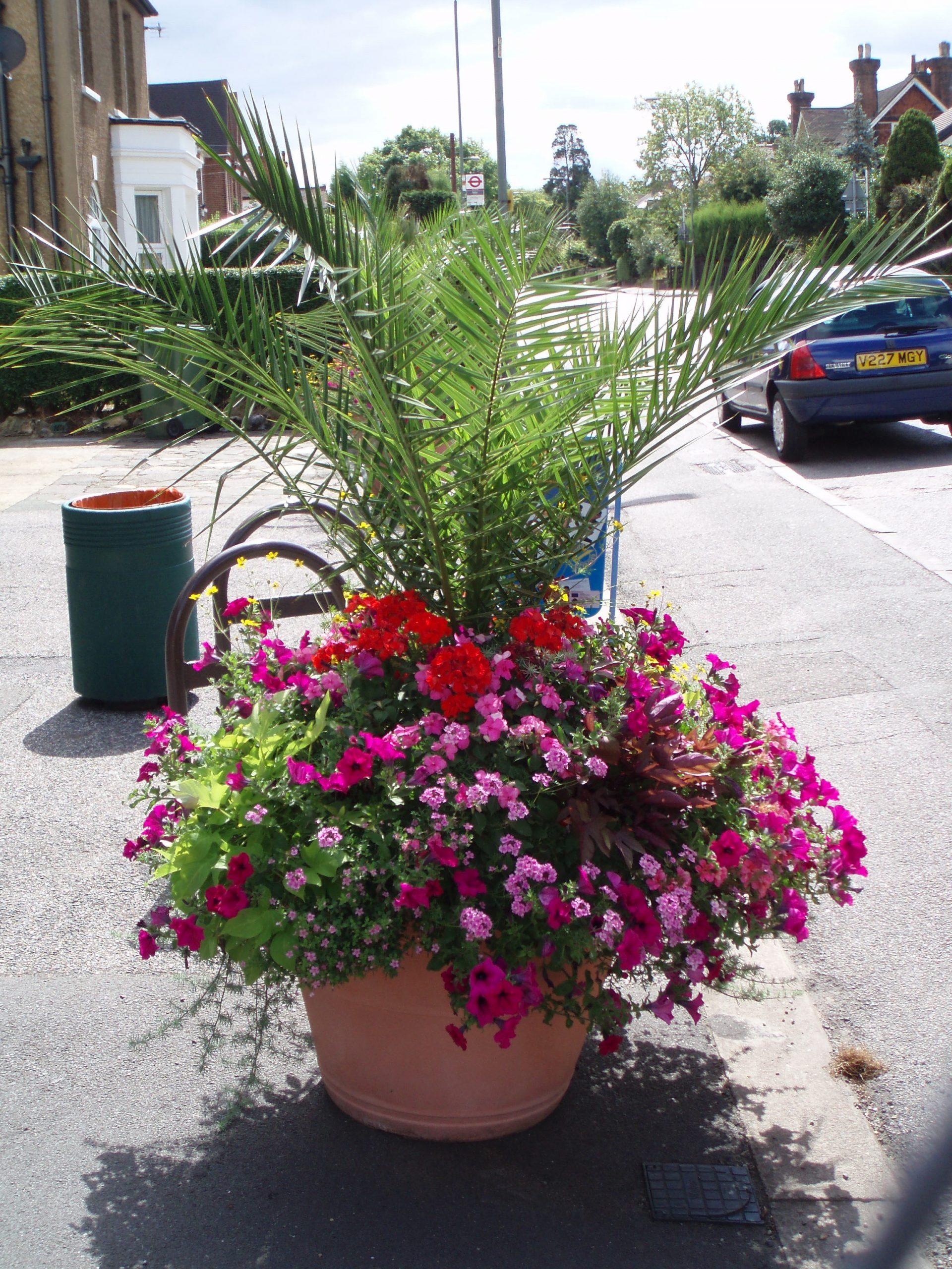 Urban planting by Amethyst