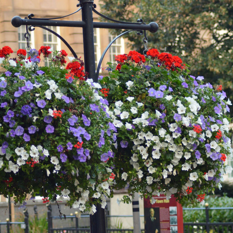Floral display service by Amethyst Horticulture